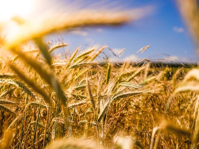 W jaki sposób powinna być zapewniana ochrona upraw?